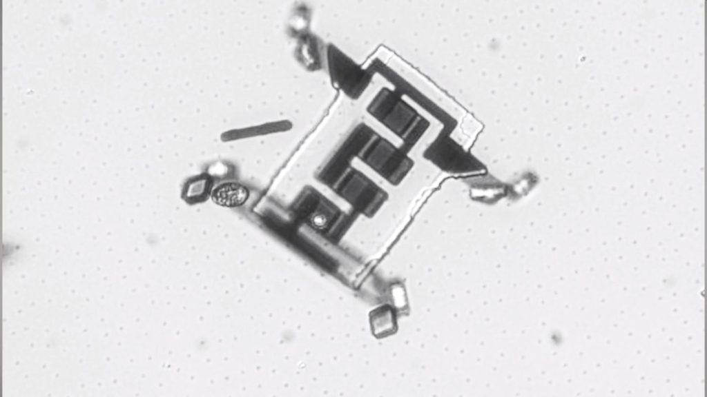 Mikroskopijne roboty obraz zmikroskopu
