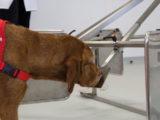 Psy nauczą sztuczną inteligencję wykrywać raka