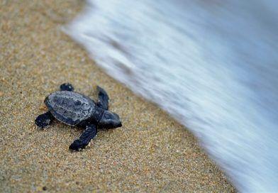 sztuczna inteligencja żółwie Australia