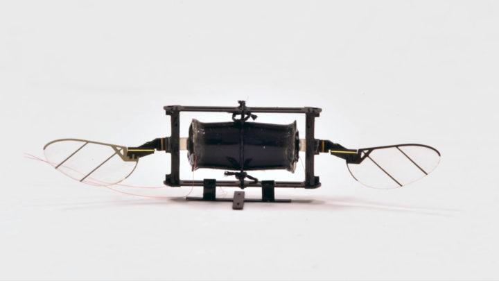 Drony inspirowane owadami są zwinne ibardzo odporne