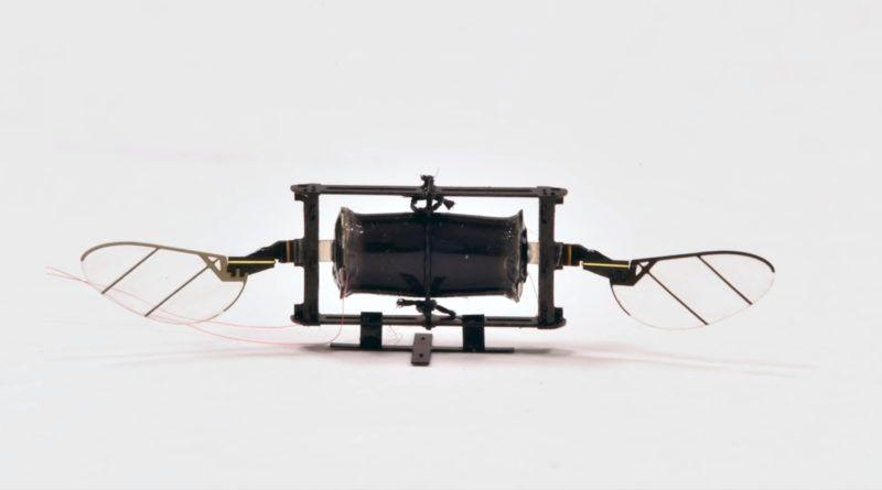 drony-inspirowane-owadami-odporne-kevin-yufeng-chen-mit-prototyp