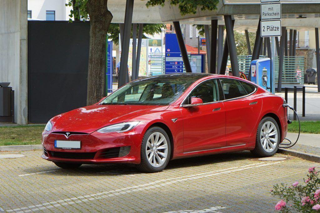 Tesla gryzonie